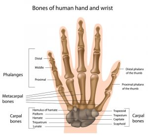 bones and wrist injuries