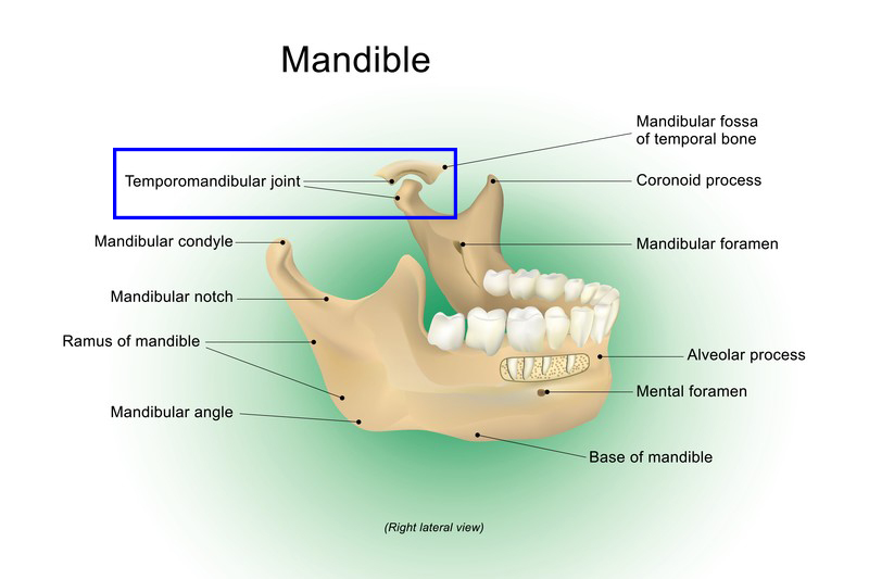 you may want a quick intro to tmj anatomy as it relates to finding tmj  relief  the bony attachments of the tmj include the mandibular fossa of the  temporal